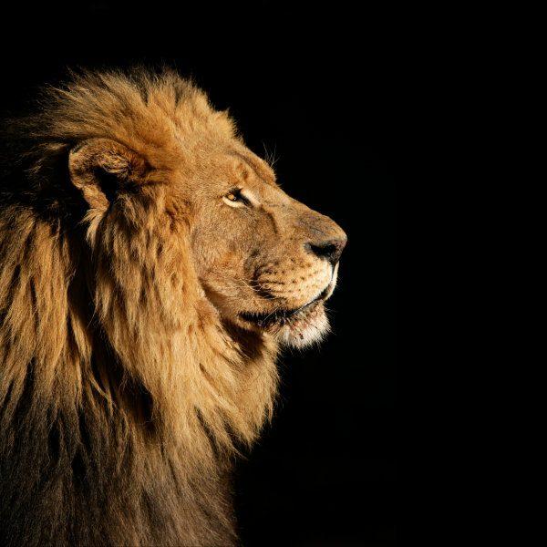 Lion of Historicism